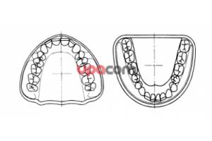 Модель ВЧ16 зубов