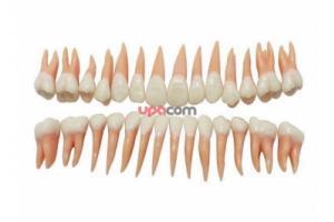 Резец 12, искусственный зуб, защелка, 100 шт